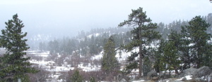 Wooded Mountains of Colorado in Snow